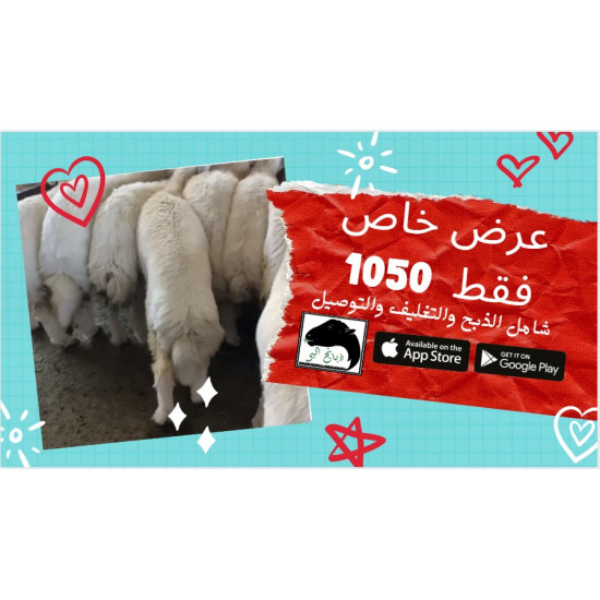 Sacrifices of freedom, trunk of a special education Jabberr Taif Including delivery And slaughter Cooking and cooking delivery available Available 150